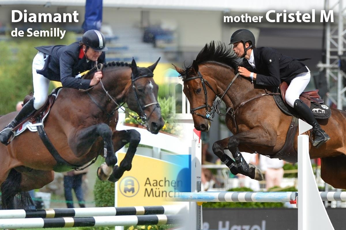 Full sister/brother Cristel 150 (Diamant) - Implanted